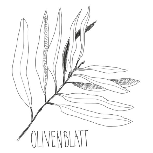 Pferdeleder | Blattwergerbung, Extrake Olivenblätter | Wunschleder Home