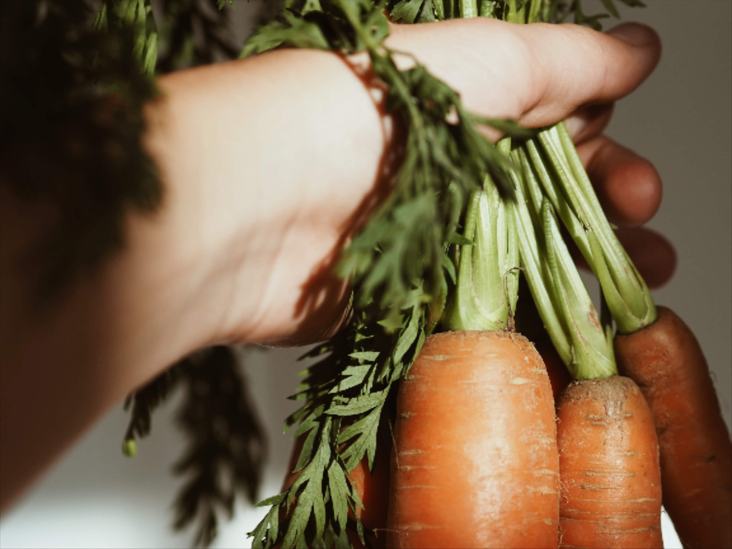Karotten | Sonnenlicht | Herbst