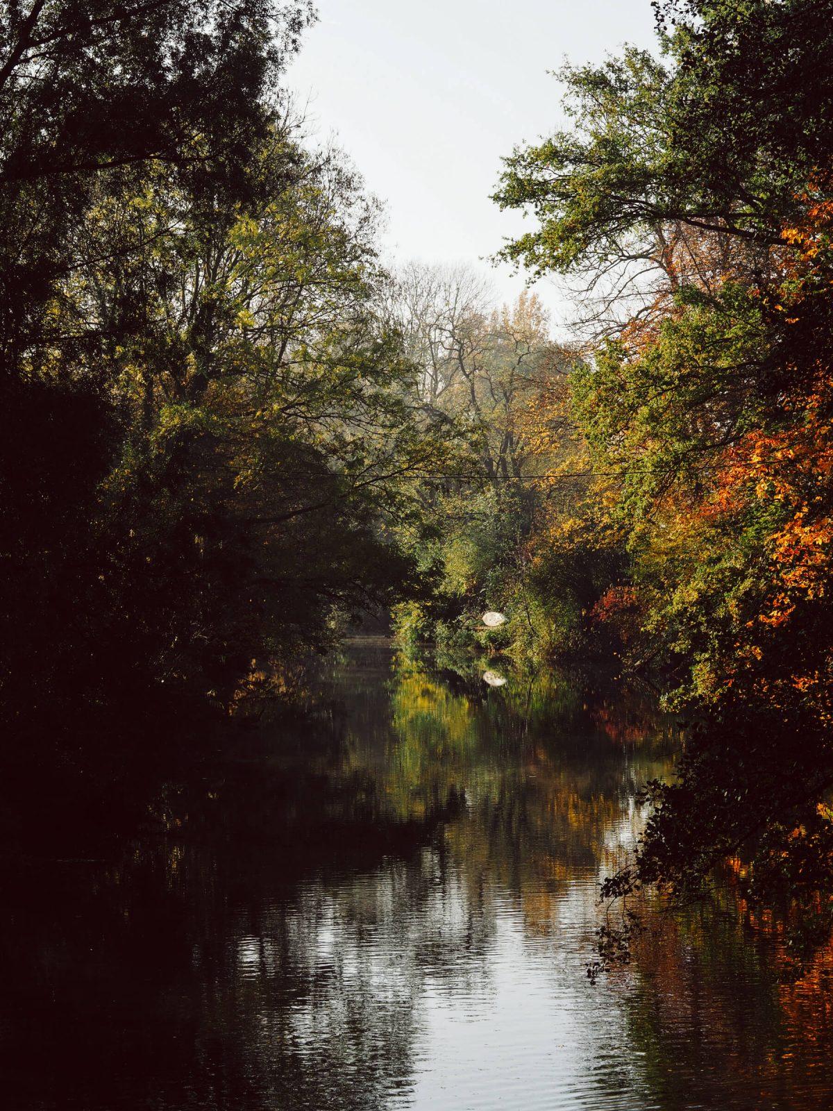Herbststimmung, goldener Herbst, Natur, Gemütlichkeit, Nebel, Blätter, Wasser, Bach